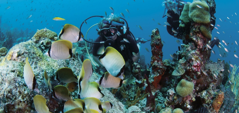 A whole new world under the sea: Dive Bequia